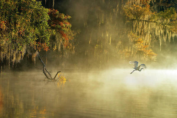 Fog Photograph - Egret by Hua Zhu