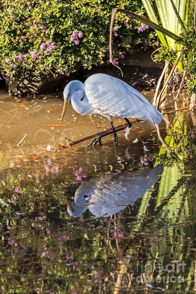 Photograph - Egret Hunting by Kate Brown