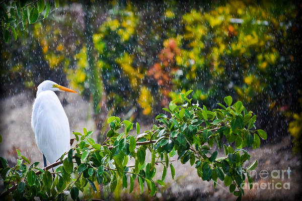 Photograph - Egret In Paradise  by Gary Keesler