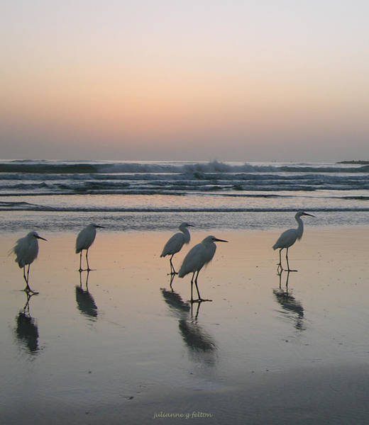 Felton Photograph - Egret Morning Sunrise Surf by Julianne Felton