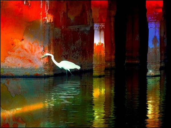 Wall Art - Photograph - Egrets Have A Palace For Nesting by Sue Jacobi