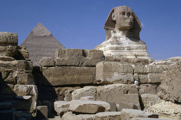 Photograph - Egypt: Sphinx And Pyramid by Granger
