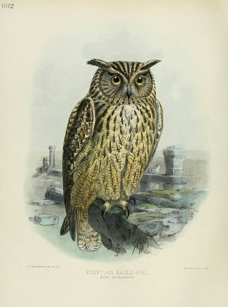 Owl Painting - Egyption Eagle Owl by Dreyer Wildlife Print Collections