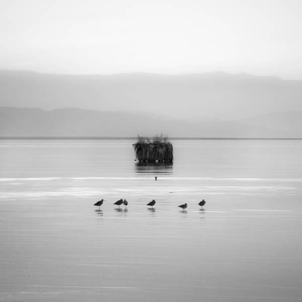 Photograph - Eight Birds by Alexander Kunz