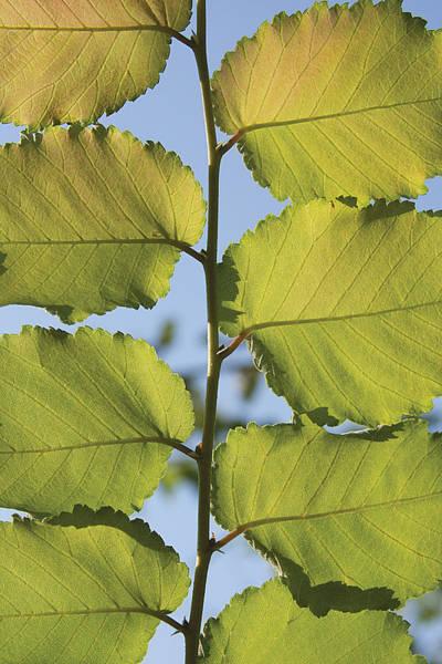 Digital Art - Eight Leaves by David Davies