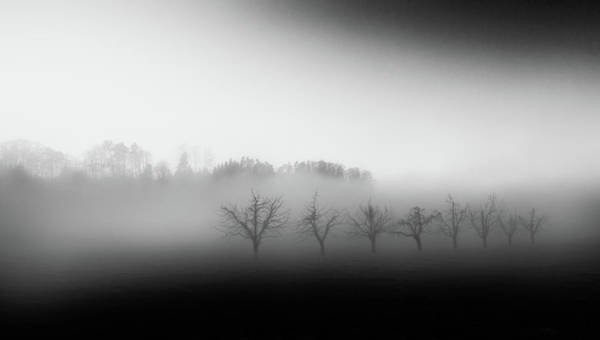Foggy Photograph - Eight Trees In The Mist by Nic Keller