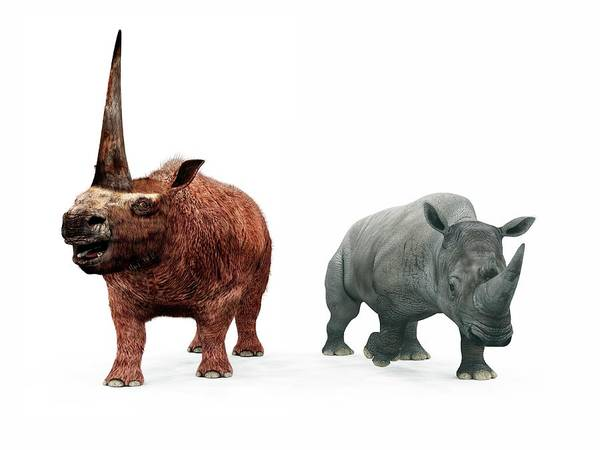 Era Photograph - Elasmotherium And Rhino Compared by Walter Myers