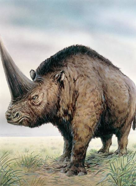 Ungulate Wall Art - Photograph - Elasmotherium by Michael Long/science Photo Library