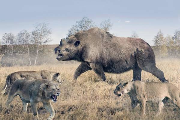 Wall Art - Photograph - Elasmotherium by Roman Uchytel/science Photo Library