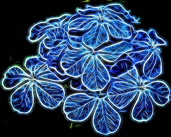 Plumbaginaceae Photograph - Electric Blue by Judy Vincent