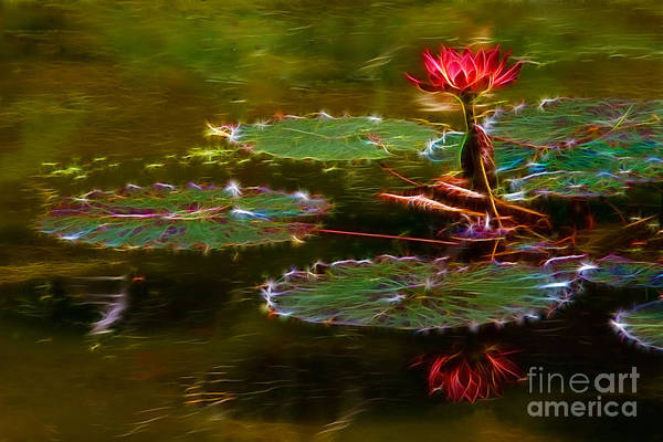 Photograph - Electric Lily Pad by Beth Sargent