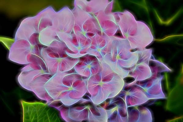 Photograph - Electric Pink by Kathy McCabe