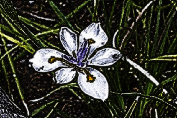 Digital Art - Electric Wild Iris by Photographic Art by Russel Ray Photos