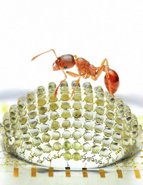 Biomimetics Wall Art - Photograph - Electronic Compound Eye With Ant by Professor John Rogers, University Of Illinois