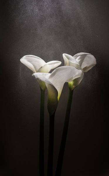 Perfume Photograph - Elegance by Ivan Vukelic