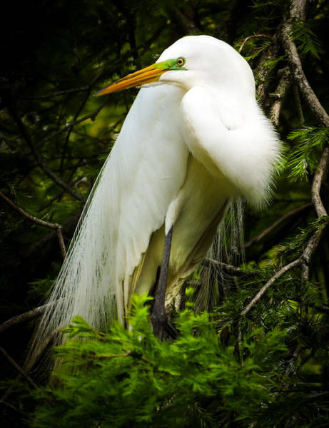 Photograph - Elegance Of Nature by Karen Wiles