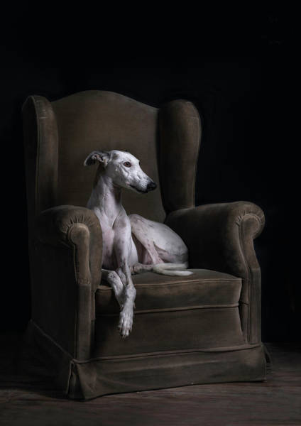Armchair Photograph - Elegancia-ii by Silversaltphoto.j.senosiain