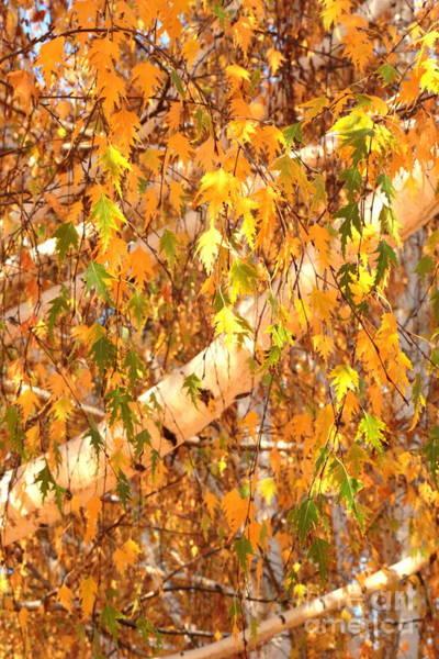 Photograph - Elegant Autumn Branches by Carol Groenen