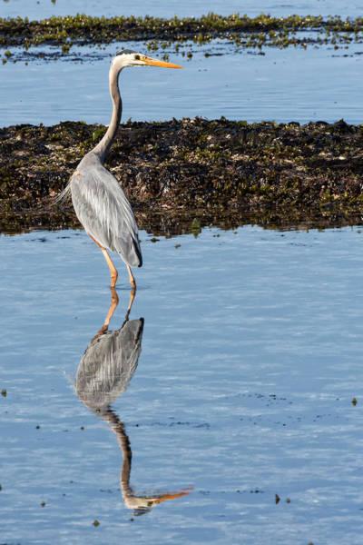 Marsh Bird Digital Art - Elegant Heron by Kathleen Bishop
