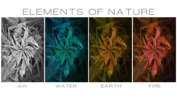 Photograph - Elements Of Nature by Marianna Mills