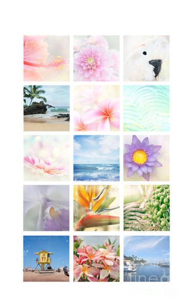 Photograph - Elements by Sharon Mau