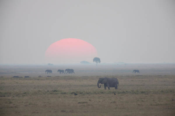Botswana Photograph - Elephant Against Sunset, Botswana by Heinrich Van Den Berg
