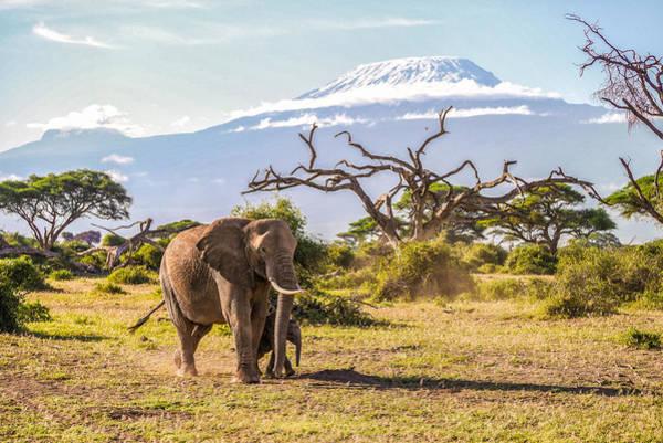 Wall Art - Photograph - Elephant And Kilmanjaro by James Gable