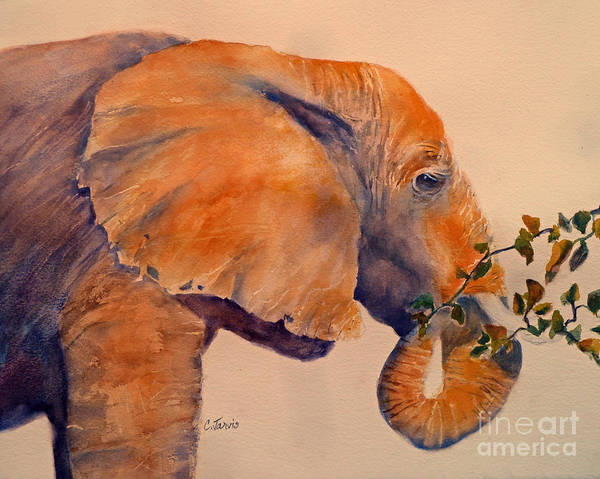 Painting - Elephant Eating by Carolyn Jarvis