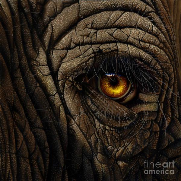 African Elephant Painting - Elephant Eye by Jurek Zamoyski