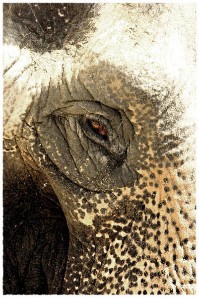 Photograph - Elephant Eye by Keith May