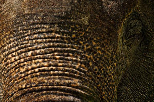 Photograph - Elephant Eye by Stuart Litoff