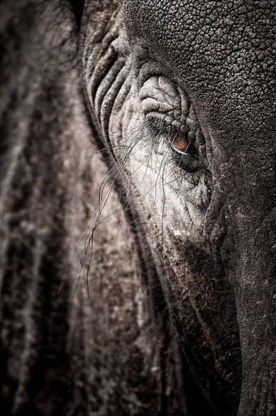 Rhinocerus Photograph - Elephant Eye Verical by Mike Gaudaur