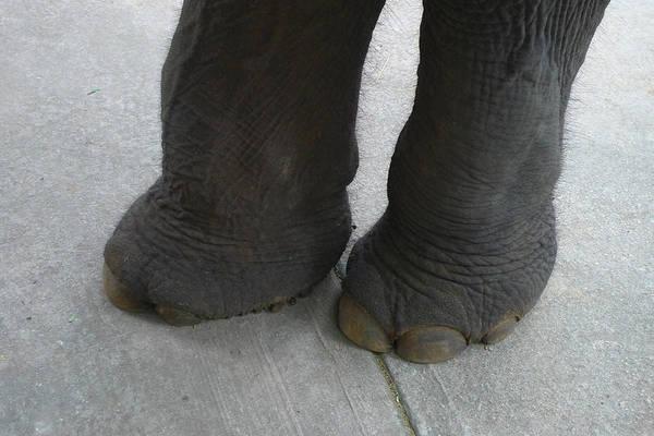 Elephant Feet Art Print