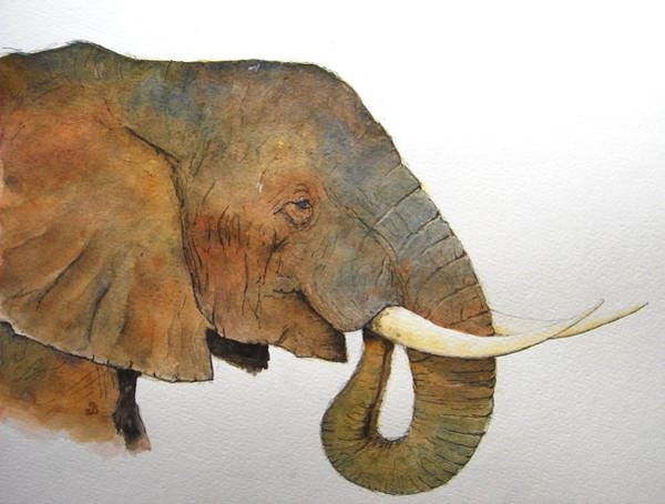 Elephant Painting - Elephant Head Study by Juan  Bosco