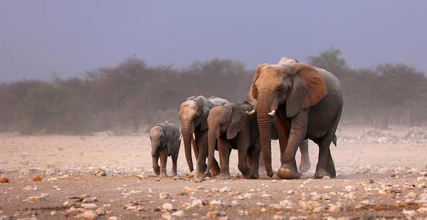 Dusty Photograph - Elephant Herd by Johan Swanepoel
