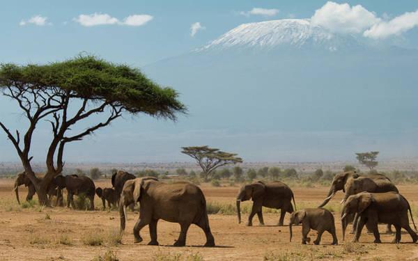 Mount Kenya Photograph - Elephant Herd Walking In Plains by Animal Images