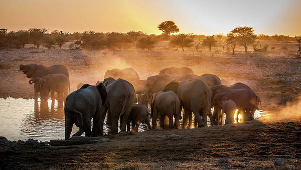 National Wall Art - Photograph - Elephant Huddle by Simon Van Ooijen