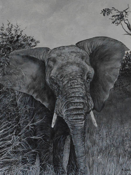Painting - Elephant In African Preserve by Nancy Lauby