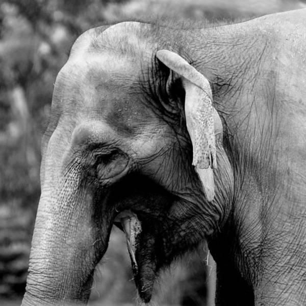 Photograph - Elephant by Jeremiah John McBride