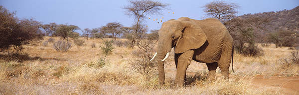 Wall Art - Photograph - Elephant Kenya Africa by Animal Images