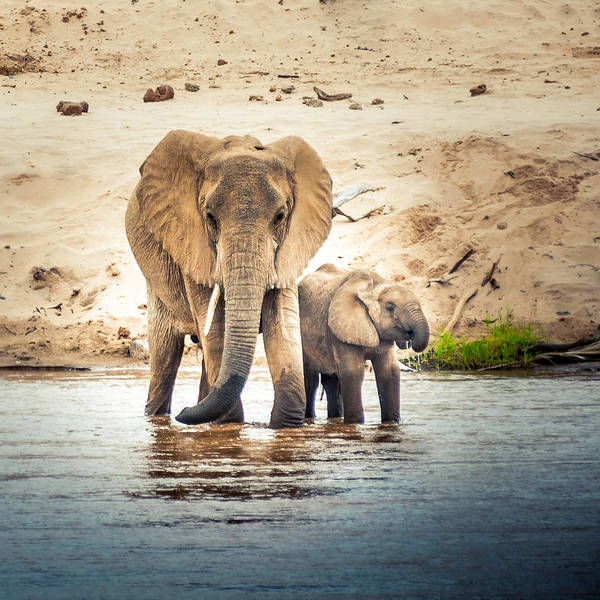 Photograph - Elephant Mama With Baby by Jim DeLillo