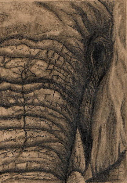 Drawing - Elephant Memories by Tamyra Crossley