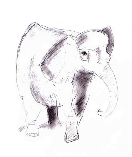Wall Art - Drawing - Elephant by Michal Boubin