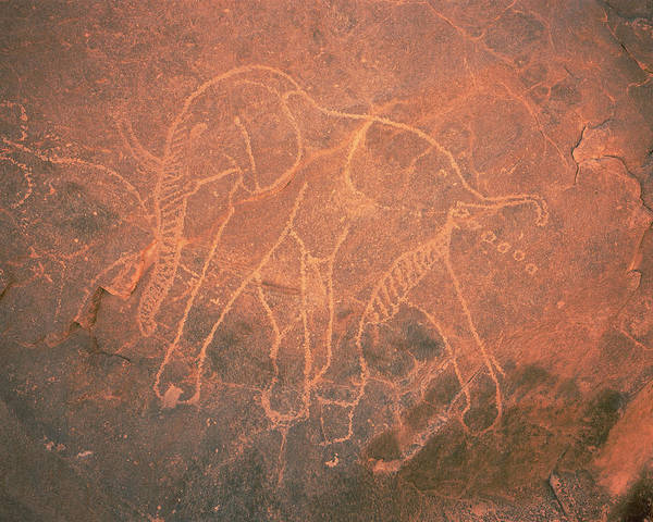 Archaic Photograph - Elephant Petroglyph by David Parker/science Photo Library