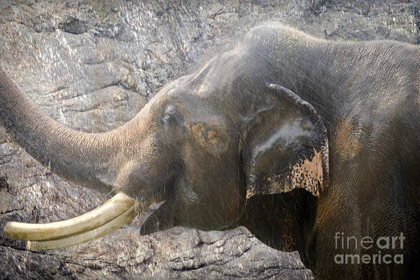 Photograph - Elephant Shower by Elle Arden Walby