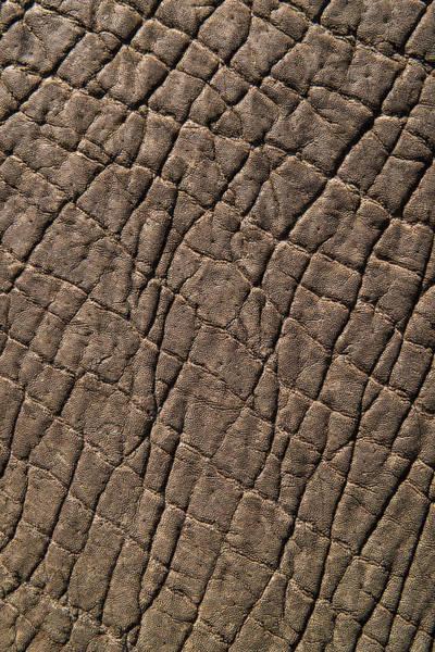 Wall Art - Photograph - Elephant Skin, Zimbabwe by Pete Oxford