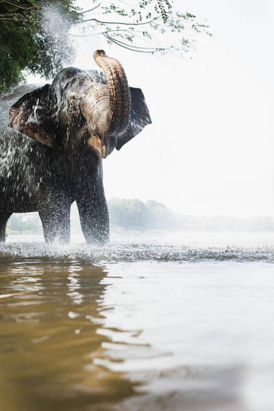 Kerala Photograph - Elephant Squirting Water In River by Gary John Norman