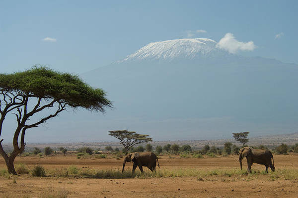 Mount Kenya Photograph - Elephant Walking In Plains With Mt by Animal Images