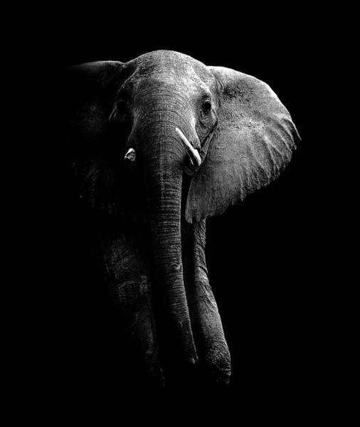 Wise Wall Art - Photograph - Elephant! by Wildphotoart