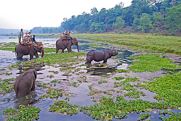 Wall Art - Photograph - Elephants And Black Rhinoceros In The Rapti River In Chitwan Np-nepal by Ruth Hager